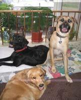 Dog Dayz Inn